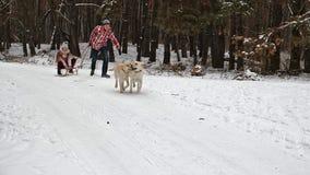 享受雪橇乘驾的少年 与家庭狗的乐趣-慢动作 股票录像