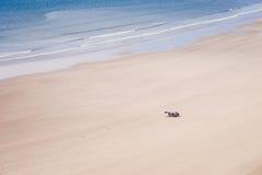 享受他们时间放松的晒黑的日光浴在光滑的人们 免版税图库摄影