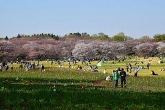 享受晴朗的春日的人们在日本 库存图片