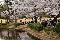 享受Hanami或开花观察的日本党 库存照片