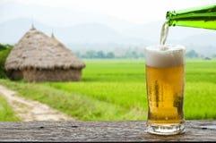 享用与米领域风景的啤酒。 免版税图库摄影