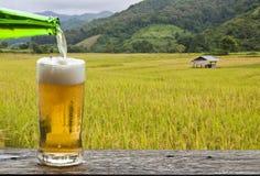 享用与米领域风景的啤酒 免版税库存照片