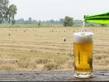 享用与米领域风景的啤酒 库存照片