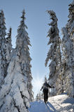 享用冬天第一雪的Backcountry滑雪者 库存图片