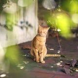 享用在大阳台的小的红色猫太阳 免版税库存图片
