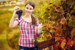 享用在她的葡萄园里的妇女 库存照片