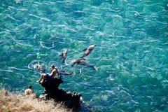 享用海洋与的未认出的游人 库存图片
