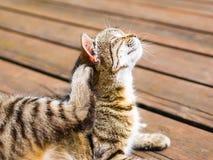 享用的猫抓在明亮的颜色 库存图片