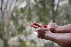 享用第一雨的人通过收集在他的棕榈的雨 库存图片