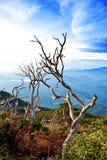 京那巴鲁山,沙巴,马来西亚的停止的木头 库存图片
