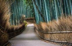 京都的竹树丛 库存图片