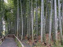京都,日本, 2017年8月14日,竹森林的日本夏季的 免版税库存照片
