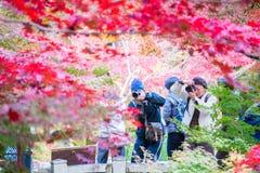京都,日本- 2017年11月17日:游人拍与人的一张照片 免版税库存照片