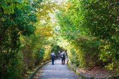 京都,日本- 2017年11月17日:由高峰viewpoi决定的路 免版税库存图片