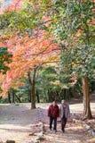 京都,日本- 2017年11月17日:由高峰viewpoi决定的路 免版税库存照片