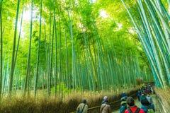 京都,日本- 2016年11月23日:Arashiyama的,京都竹森林 库存照片