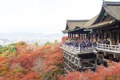 京都,日本- 2016年11月25日 - 美好的Momiji秋天c 免版税图库摄影