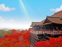 京都,日本- 2016年11月21日:美丽的红色秋叶和明白蓝天在Kiyomizu寺庙 免版税库存图片