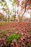 京都,日本- 2015年11月28日:许多游人参观Tofukuji 免版税库存照片