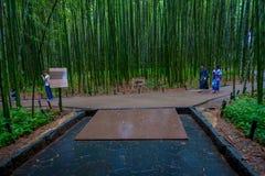 京都,日本- 2017年7月05日:走在道路的未认出的人民在美丽的竹森林在Arashiyama,京都 库存照片