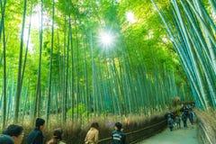 京都,日本- 2016年11月23日:Arashiyama的,京都竹森林 免版税图库摄影