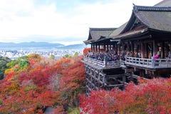 京都,日本- 2016年11月25日 - 美好的Momiji秋天c 图库摄影