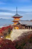 京都,日本- 2016年11月25日 - 美好的Momiji秋天c 免版税库存图片