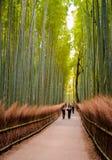 京都,日本- 11月12 :向竹森林的道路在京都, 库存图片