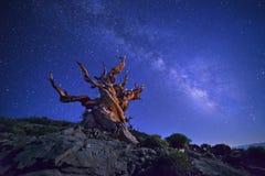 亮光在满天星斗的天空下 图库摄影