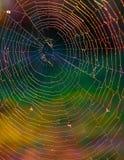 亮光spiderweb 库存图片