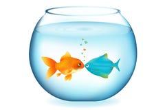 亲吻向量的鱼 库存照片