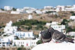 亲吻在一块白色石头的两只可爱的鸽子 免版税图库摄影