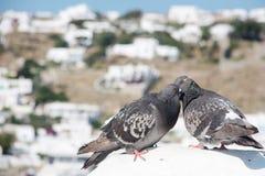 亲吻在一块白色石头的两只可爱的鸽子 库存照片