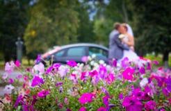亲吻在壮观的花圃背景的婚礼夫妇  city& x27; s地平线 免版税库存图片