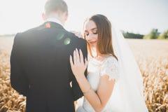 亲吻在春天自然特写镜头画象的婚礼夫妇 免版税库存图片