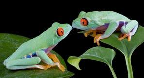 亲吻结构树的青蛙 免版税库存照片