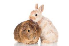 亲吻试验品的小兔子 免版税库存照片