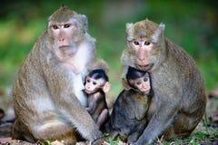 亲密的家庭猴子 库存图片