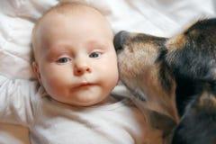 亲吻两个月的婴孩的爱犬 免版税库存图片