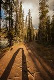亲吻在一条树木丛生的道路的两个阴影在金黄阳光下 免版税库存图片