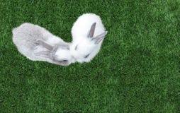 亲吻在心脏的逗人喜爱的小婴孩复活节兔子(白色和灰色兔子)喜欢在草的形状在公园在角落 免版税库存照片