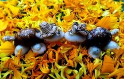 亲吻在黄色花的双乌龟玩偶 免版税库存图片