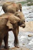 亲吻大象 免版税图库摄影