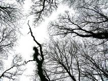 亲吻天空的冬天树 免版税图库摄影