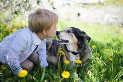 亲吻宠物德国牧羊犬狗外面在花的幼儿我 免版税图库摄影