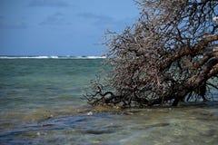 亲吻海的树 免版税库存图片
