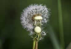 亲吻的植物 库存图片