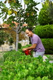 人与工具的修剪灌木在庭院里 图库摄影