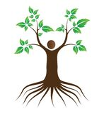 人与根的爱护树木 皇族释放例证
