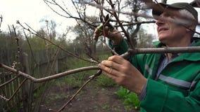 人与飞剪机的修剪树 男性农夫在有修枝剪或剪枝夹的春天庭院里削减分支 股票视频